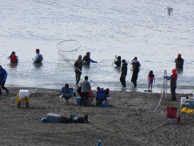 Here is the 5 foot diameter nets used for Dipnet fishing