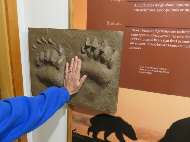 Comparing Jane's hand to a Bear's Paw print