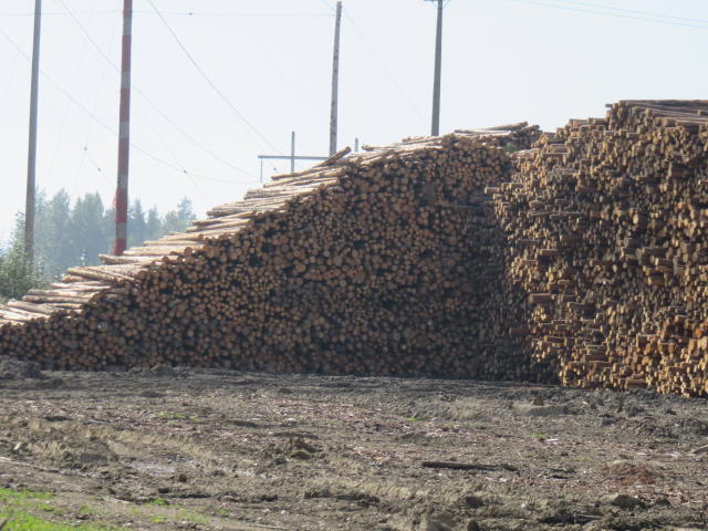 Huge log piles surround processing plants