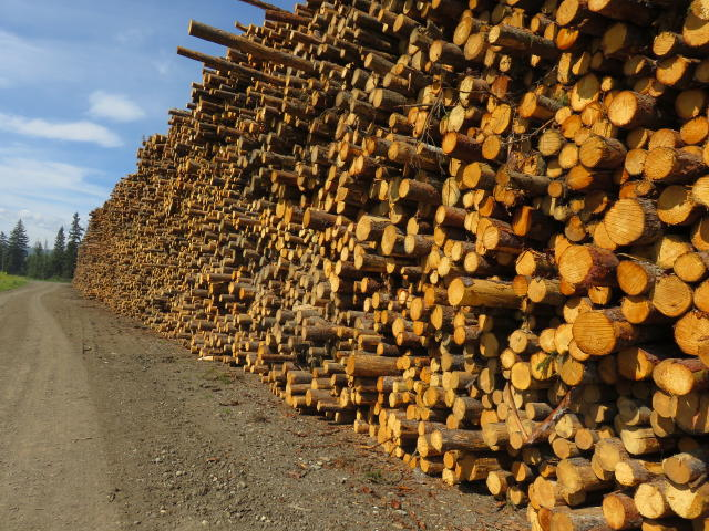 A wall of logs