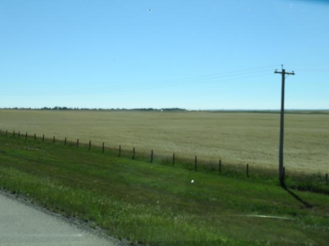 Iconic Prairie Grain fields