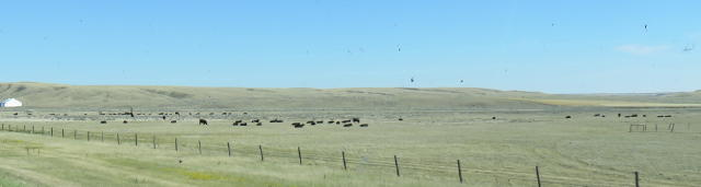We forget that livestock is also part of the prairie experience