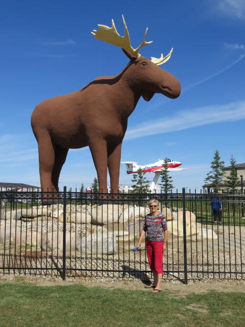 The World's largest Moose